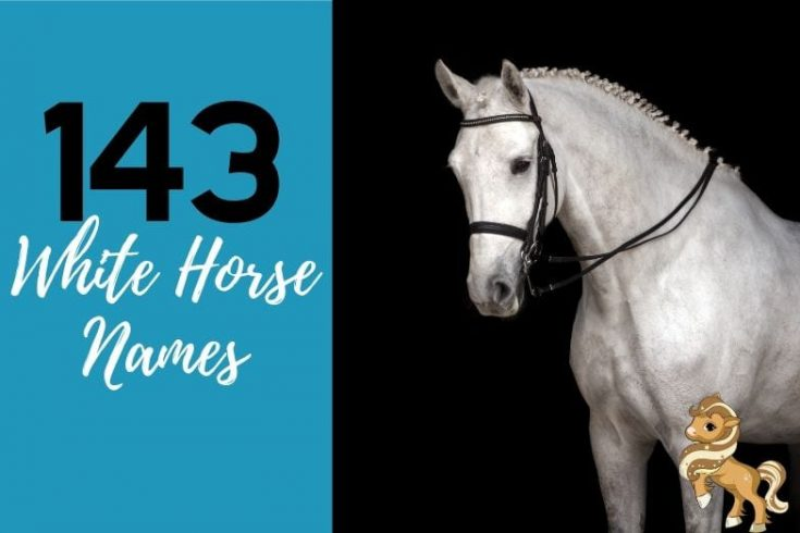 143 White Horse Names - Including Barn Names & Show Names