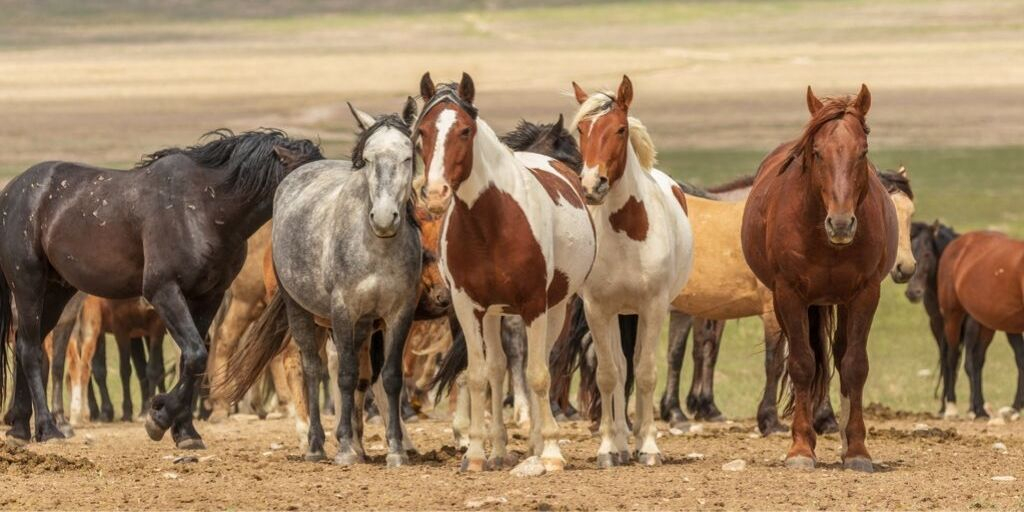 Cheapest Horse Breeds