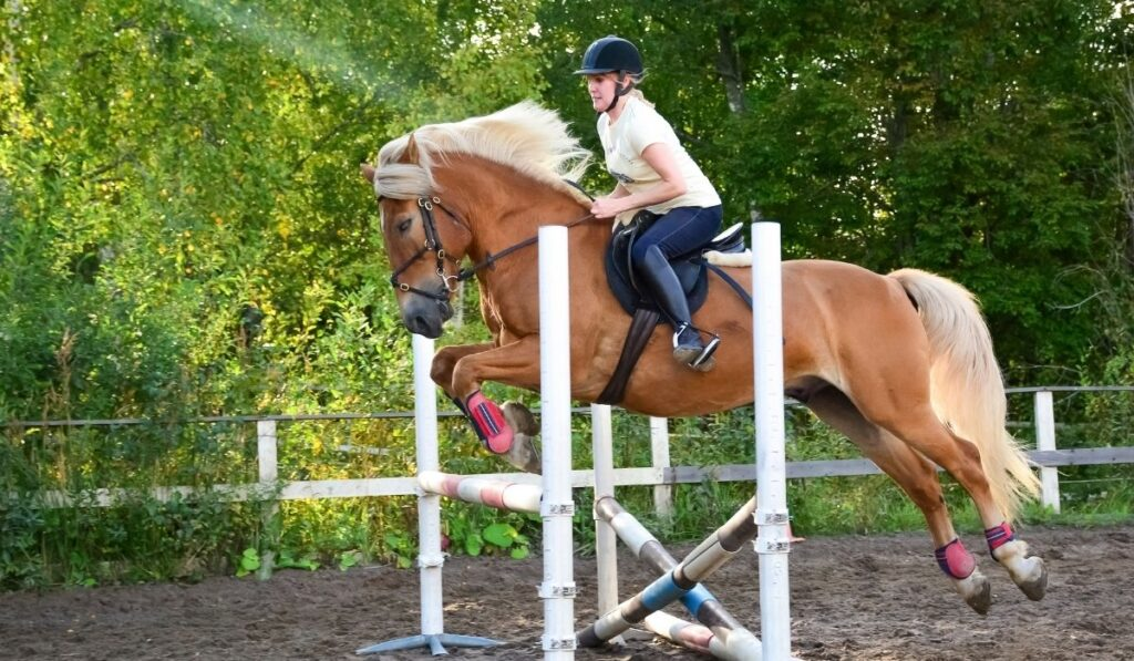 woman horseback riding and showjumping