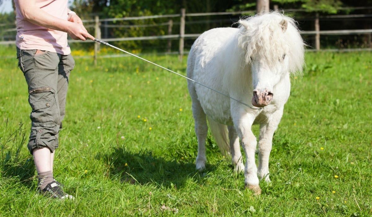 woman train pony