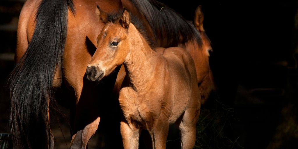 young foal with its dam